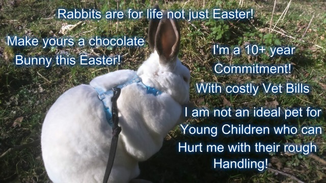 Bunnies are for life not just Easter