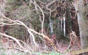 Walddrache