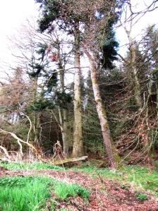 fruehlingswald1