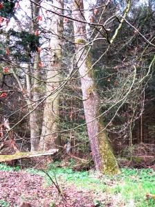 fruehlingswald3